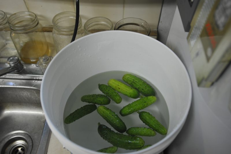 Fermented Pickles - wash those cukes!