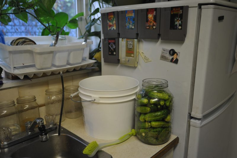 Fermented Pickles - packed in